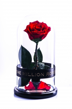 The Million Roses (The Beauty & The Beast)