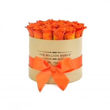 Gold Box Orange Rosen